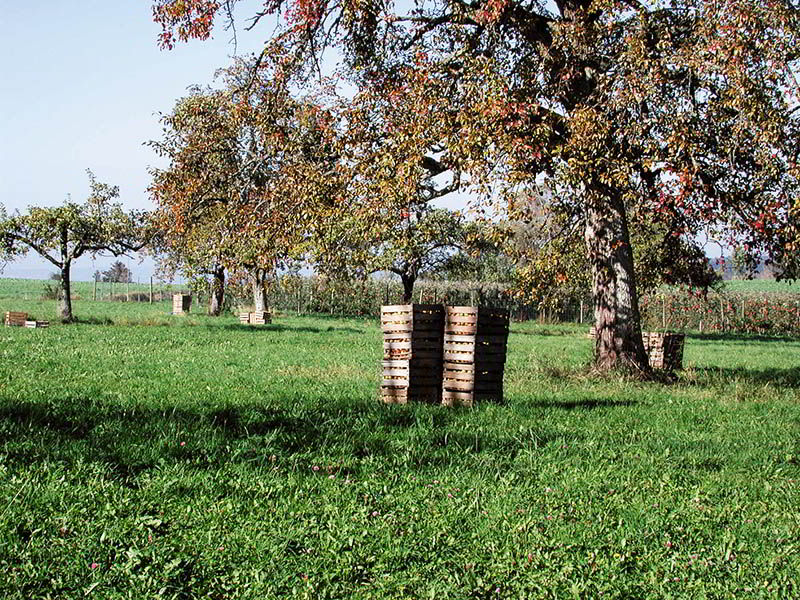 hkp-rotary-mulchers-meadow-orchard
